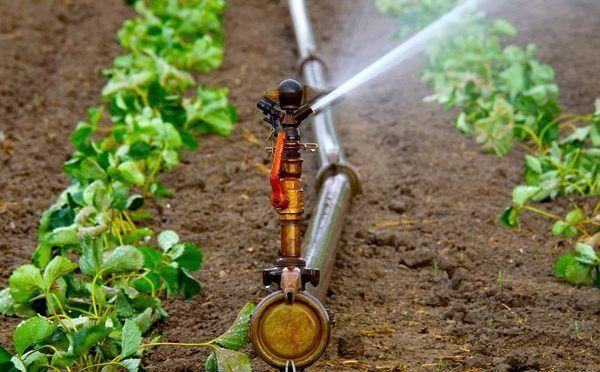 Por un uso más eficiente del agua en la agricultura (UNAM Global)