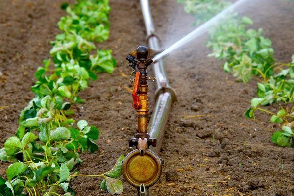 Sistemas de riego y disponibilidad del agua