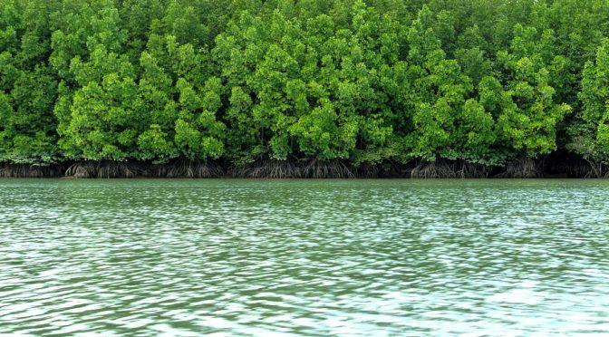 Quintana Roo: Piden dejar sin efecto autorización al proyecto Hard Rock Riviera Cancún por inminente riesgo de destrucción de manglar, arrecife y duna por parte del proyecto (CEMDA)