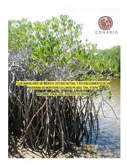 Los manglares de México: estado actual y establecimiento de un programa de monitoreo a largo plazo: 1ra. etapa