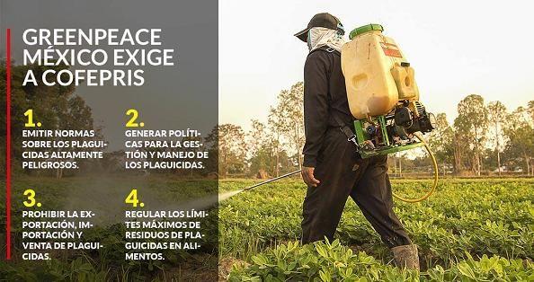 Greenpeace alerta por el uso de plaguicidas que dañan alimentos, agua y la salud de los mexicanos