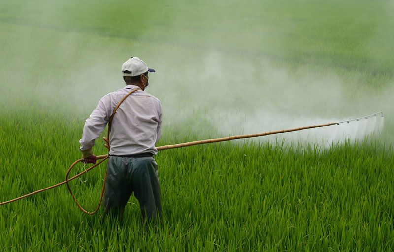 Agroquímicos en los alimentos