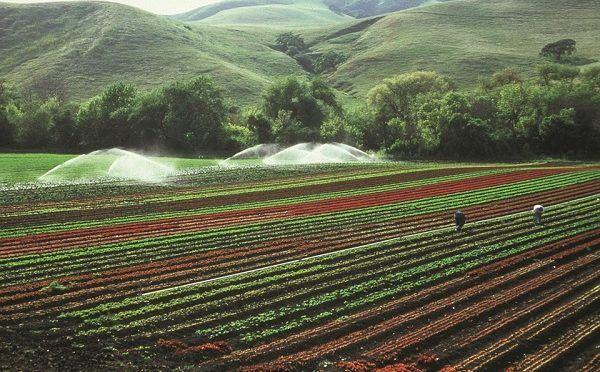 Agua y agricultura: Más que producir alimentos