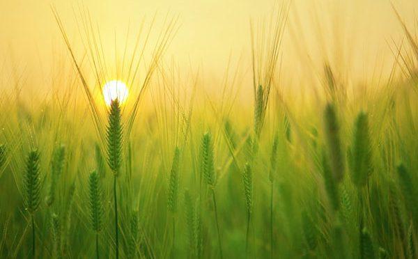 El cambio climático y la agricultura