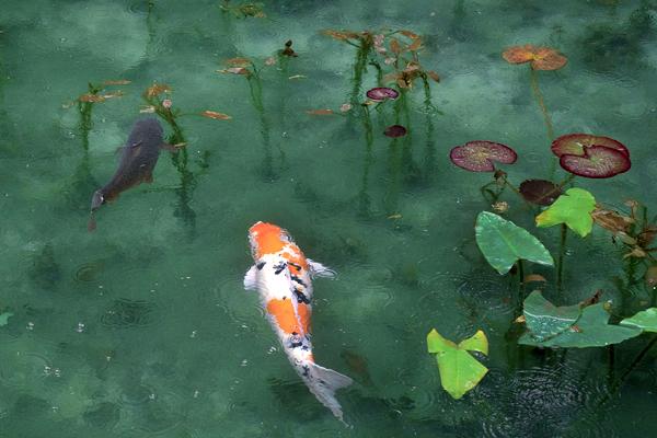 Agua y biodiversidad