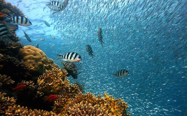 México: La importancia de proteger al arrecife (El Universal)