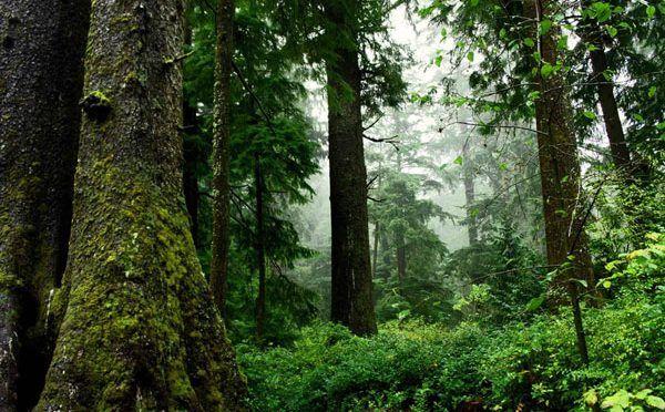 """""""México, sin política forestal para bosques templados"""" (El Universal)"""