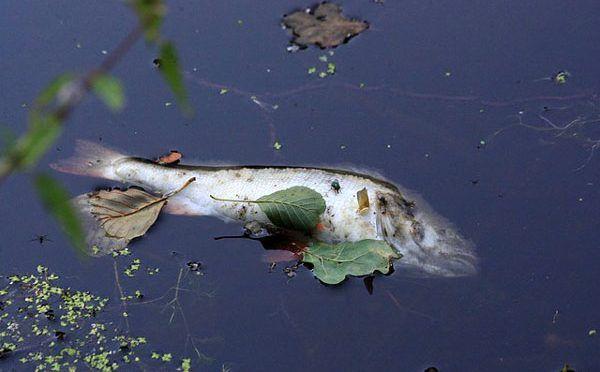 Pescadores de una presa en Guerrero acusan a hidroeléctrica de contaminar el agua (Sin Embargo)