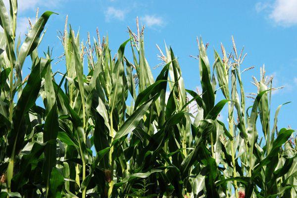 Agua sólida, alternativa para la agricultura