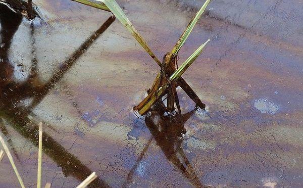 No sólo agotan recursos: Pemex y mineras contaminaron 70% del agua, alertan ONU y académicos (Sin Embargo)