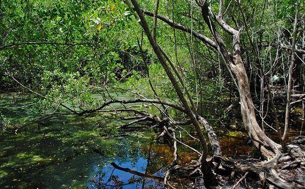 Día Internacional de la Protección del Ecosistema de Manglar (SEMARNAT)