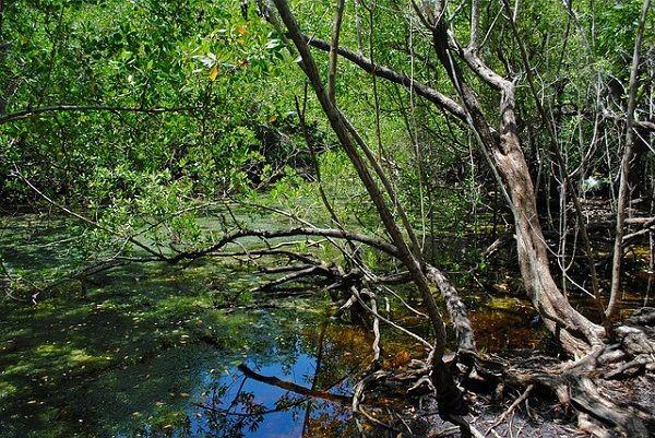 Día mundial del agua 2018: La respuesta está en la naturaleza.