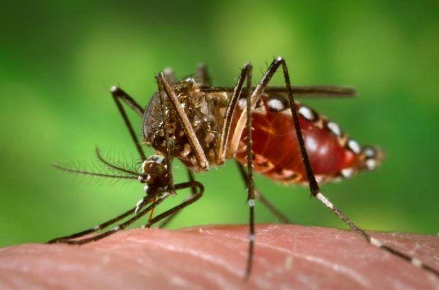 Agua y Salud: evitemos la proliferación de mosquitos