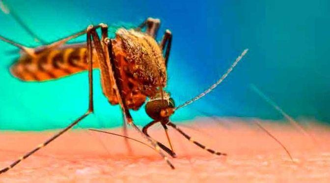Nueva oleada mundial de dengue