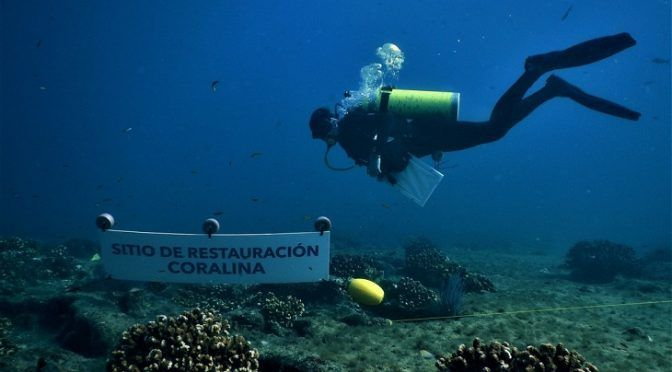 BCS: Restauran arrecifes de coral en Baja California Sur (Ecoticias)