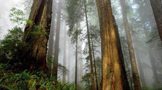 México: Sequías por el cambio climático, la causa de muerte de los grandes árboles: UNAM (Sin Embargo)