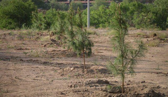 """Aguascalientes: Festeja la Secretaría de Sustentabilidad, Medio Ambiente y Agua de Aguascalientes el """"día internacional del árbol"""" (La Jornada de Aguascalientes)"""