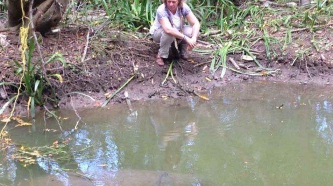 Pide Profepa a especialistas muestras de donde murieron manatíes en Tabasco (El Universal)