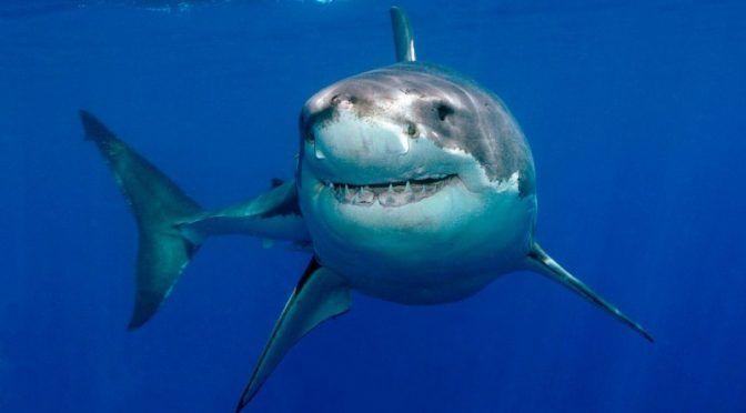 Mérida: Zonas prioritarias para la conservación de tiburones en México (Agencia informativa Conacyt)