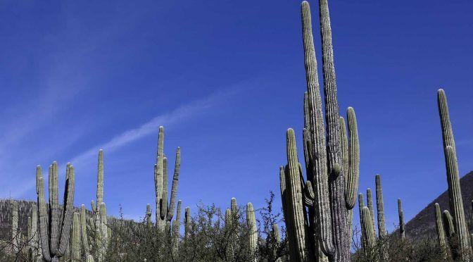 Valle de Tehuacán-Cuicatlán declarado Patrimonio Mundial (MVS Noticias)