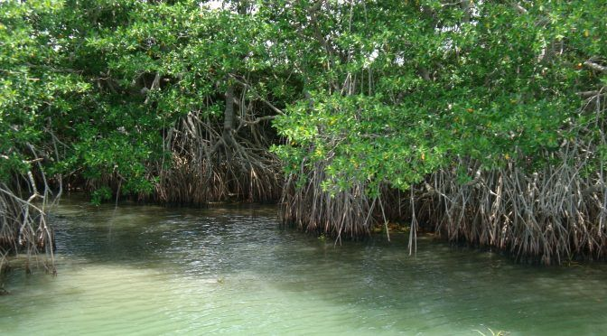 Pantanos de Centla, resguarda los humedales más grandes de Mesoamérica (Semarnat)