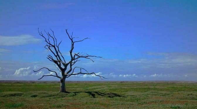 Mundo: Los periodos de lluvias y altas temperaturas podrían estar provocados por el calentamiento global (iAgua)