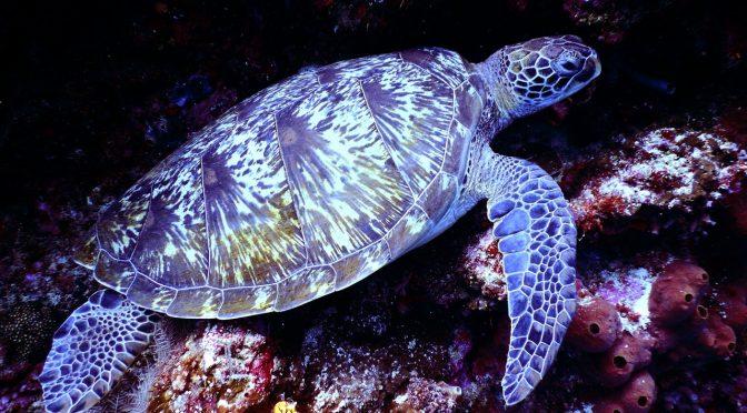 El tráfico ilegal de especies de vida silvestre marina (Semarnat)