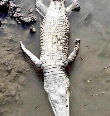 Denuncian tóxicos en ríos de Tabasco (Reforma)