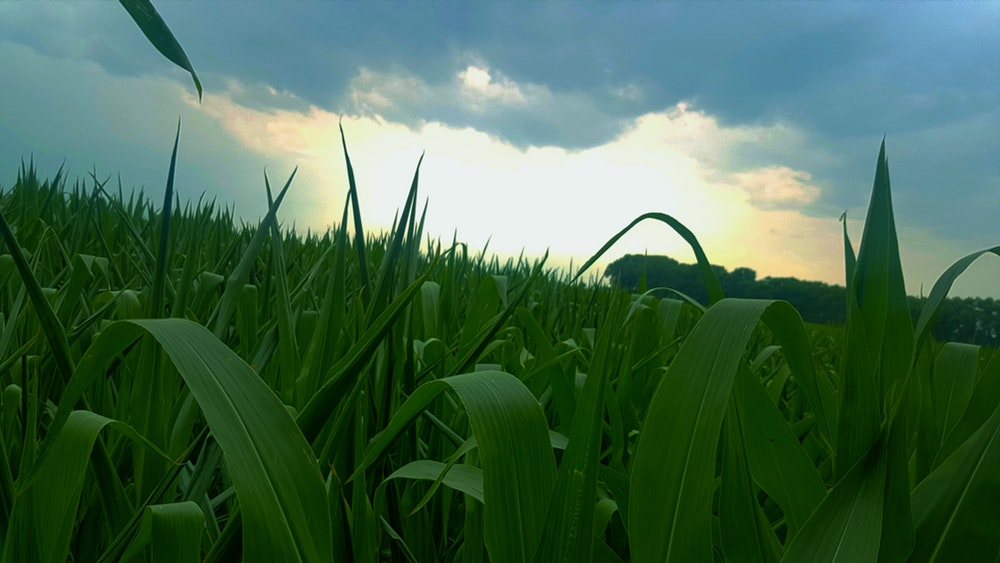 Agua, agricultura y capa de ozono