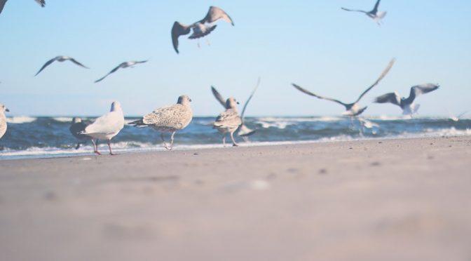 III Congreso Inbternacional de Migración de Aves y Cambio Global, en Tarifa (Ecoticias)