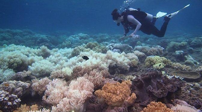 El blanqueamiento afectó a la profundidad de la Gran Barrera de Coral (Ecoticias)