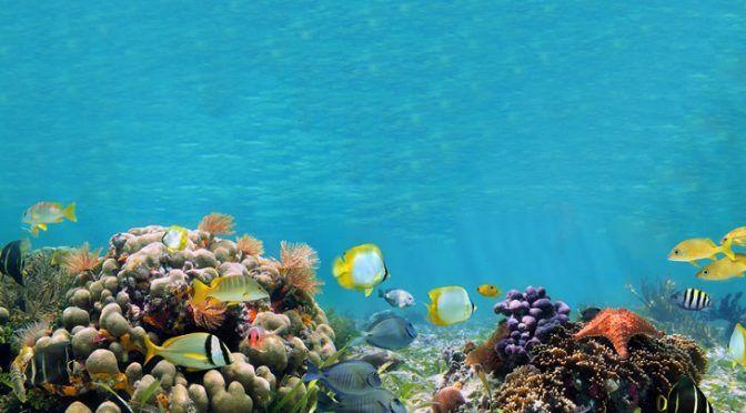 La ONU se pone manos a la obra para conservar y proteger casi dos tercios del océano (Ecoticias)