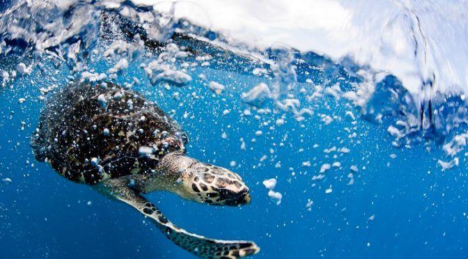 Tratado Global de los Océanos en la ONU (Ecoticias)