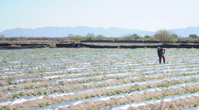 Coahuila: Piden productores más agua para riego (El Siglo de Torreón)