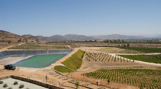 La crisis del agua ya alcanzó a la producción del vino en Valle de Guadalupe (El Financiero)