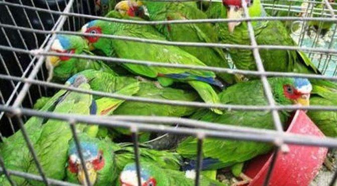 NAICM perjudicará a 200 mil aves (El Universal)