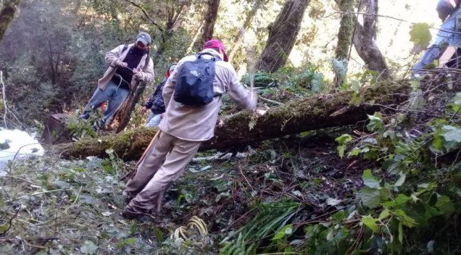 Puebla: Caída de árbol deja sin agua a colonias de Huachinango (Milenio)
