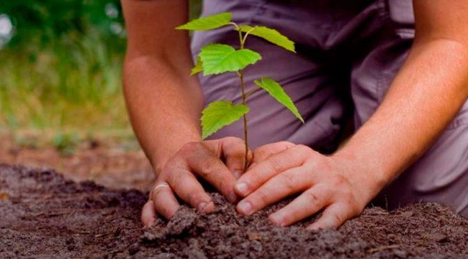CdMx: Podría perderse 50% de la reforestación 2018 por fríos (Milenio)