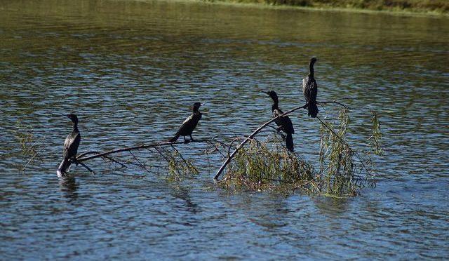 Urge plan de ordenamiento hidrológico para protección de la cuenca del bosque de Cobos, en Aguascalientes (La Jornada Aguascalientes)