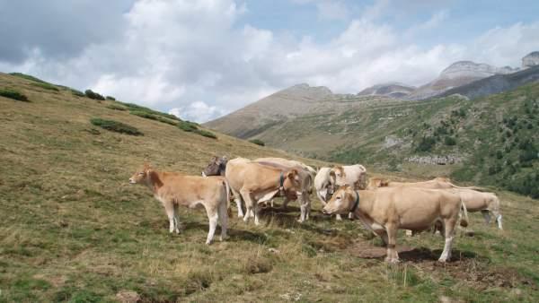 Medio Ambiente destina 123.000 euros a ayudas en defensa de la fauna, apoyo a la trashumancia y fomento de proyectos (20minutos)