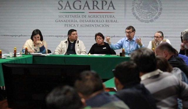 Gobierno federal abre el dialogo y asume compromisos con los apicultores mayas. (Mi Punto de Vista)