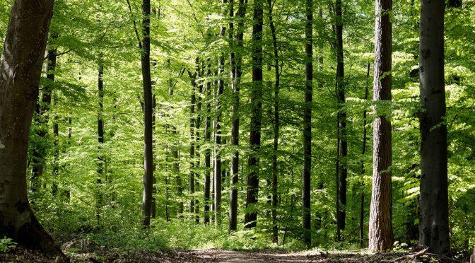 Comunicación ambiental para la conservación (gob.mx)
