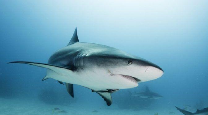 El 72% de los países no cumple sus obligaciones para proteger a tiburones y rayas en sus aguas territoriales (Ecoticias)