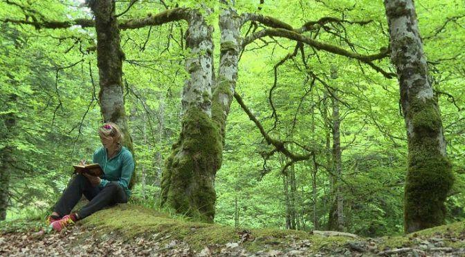 España: Los bosques que almacenan más carbono también tienen más biodiversidad (Ecoticias)