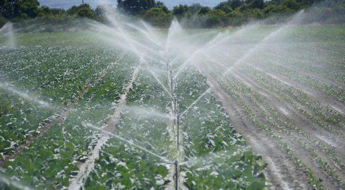 Algo está pasando con el agua (La Voz de Galicia)