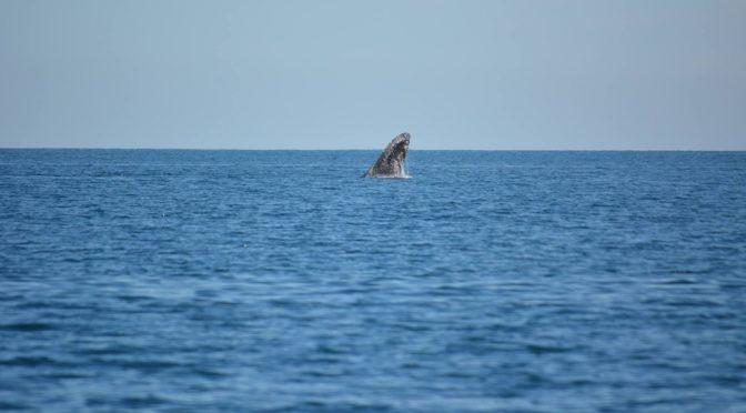 Rechaza Semarnat hacer consulta sobre plan en Cabo Pulmo: ONG (La Jornada)