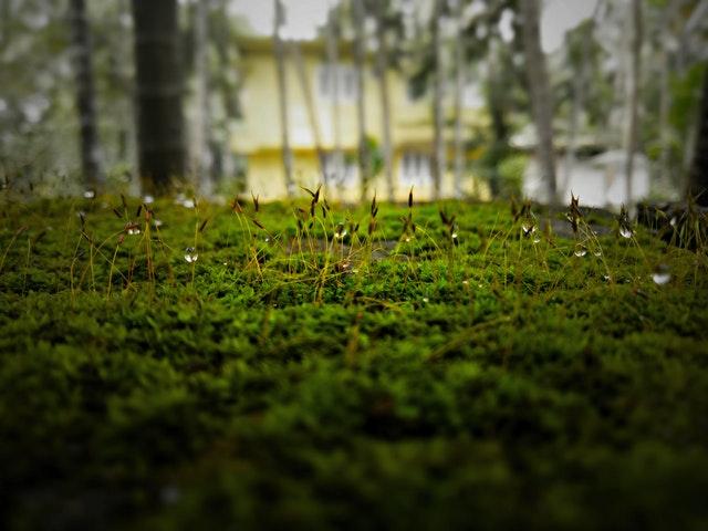 Conservación de suelos y calidad del agua