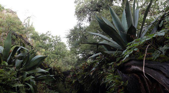 Sector forestal de México anuncia que buscará apoyo internacional ante reducción presupuestal (Sin Embargo)