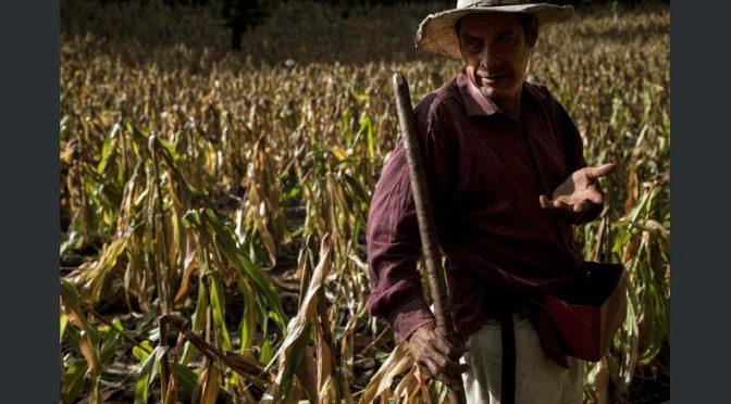 El corredor seco de Centroamérica comparte tecnología para enfrentar sequía (El Economista)