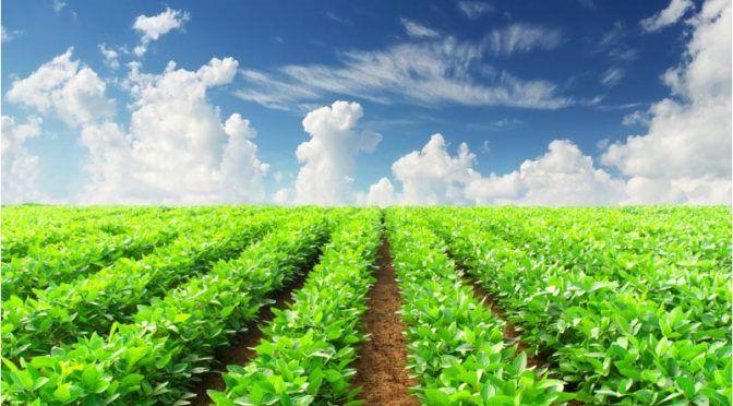 La agricultura industrial acapara los recursos pero no es quien alimenta a las personas (EcoPortal)
